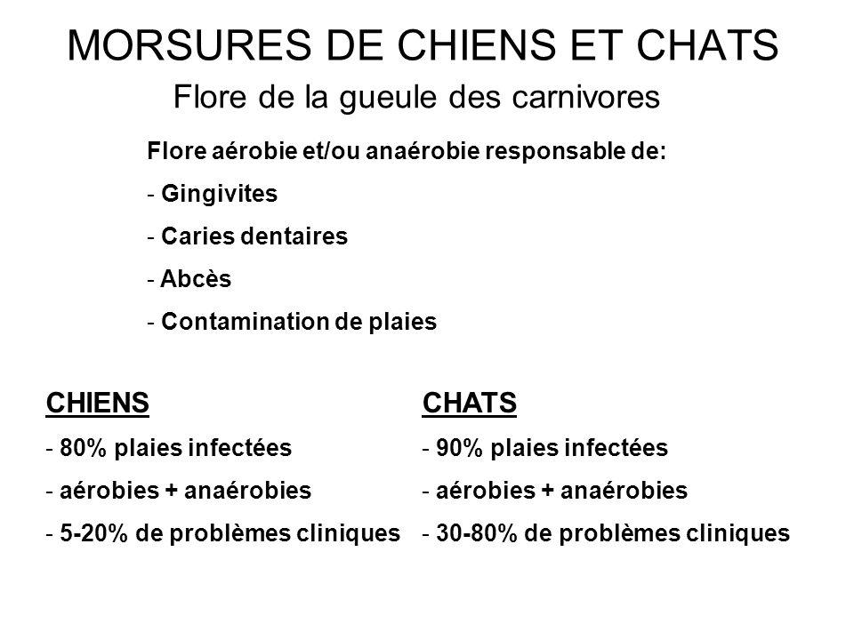 MORSURES DE CHIENS ET CHATS Flore de la gueule des carnivores Flore aérobie et/ou anaérobie responsable de: - Gingivites - Caries dentaires - Abcès -