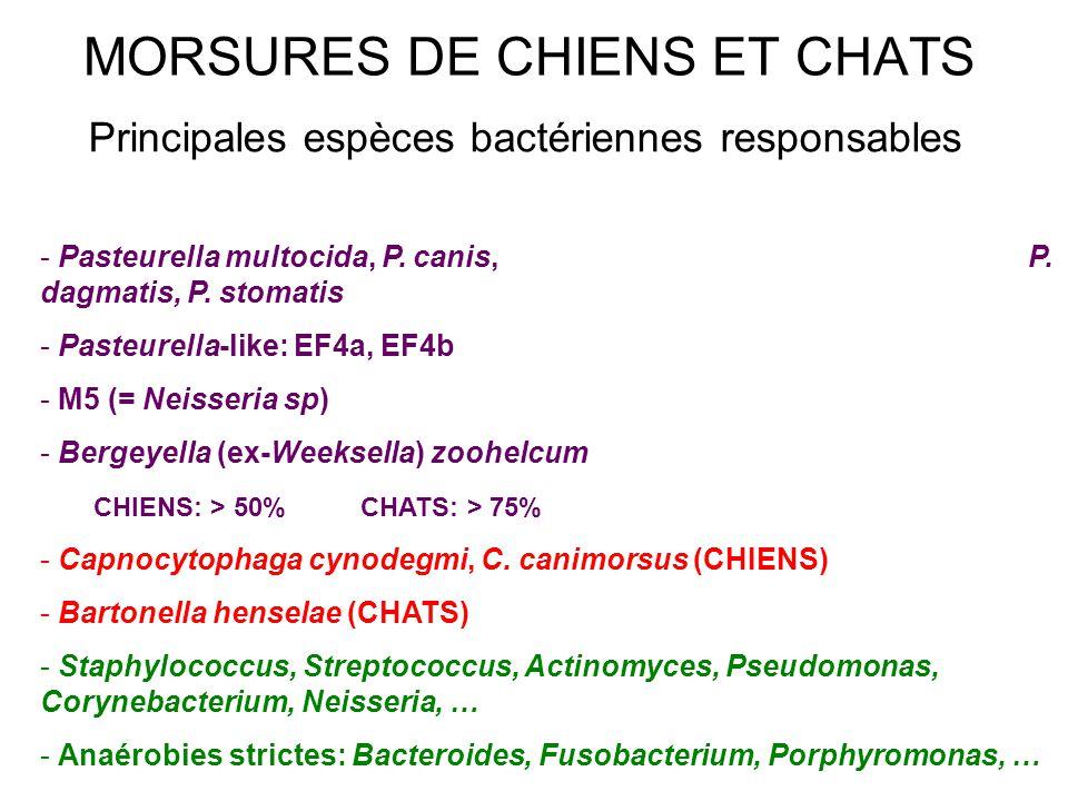 Principales espèces bactériennes responsables - Pasteurella multocida, P. canis, P. dagmatis, P. stomatis - Pasteurella-like: EF4a, EF4b - M5 (= Neiss