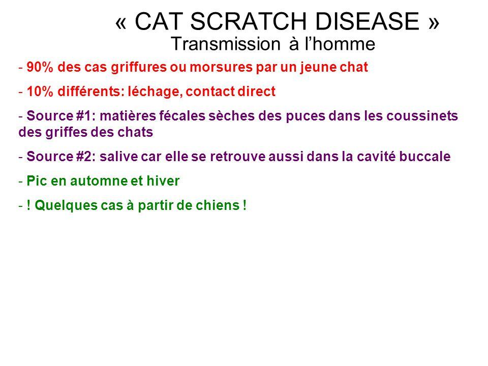 Transmission à lhomme - 90% des cas griffures ou morsures par un jeune chat - 10% différents: léchage, contact direct - Source #1: matières fécales sè