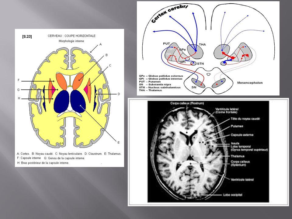 Kinésithérapie Ergothérapie Prise en charge sociale Interventions chirurgicales: Implantation stéréotaxique intra-cérébrale De stimulateurs dans les noyaux sous-thalamiques Patients jeunes sans contre-indication opératoire Traitements non médicamenteux