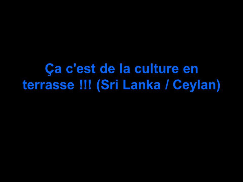 Ça c'est de la culture en terrasse !!! (Sri Lanka / Ceylan)