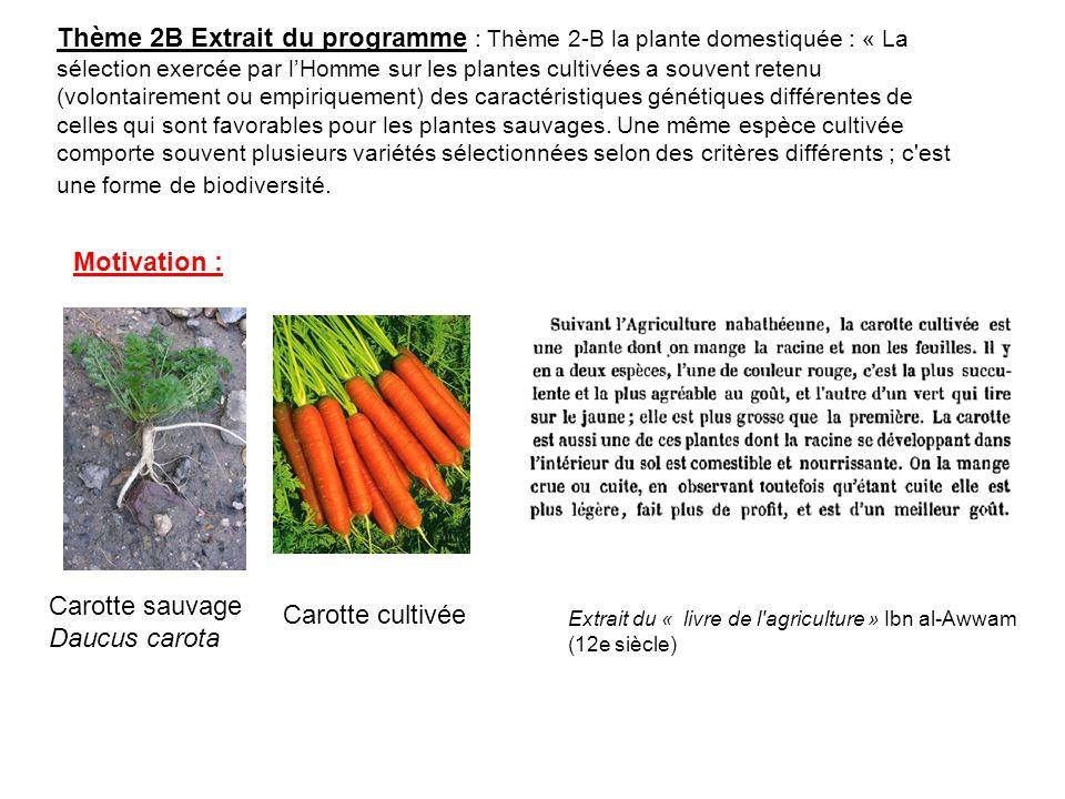 Thème 2B Extrait du programme : Thème 2-B la plante domestiquée : « La sélection exercée par lHomme sur les plantes cultivées a souvent retenu (volont