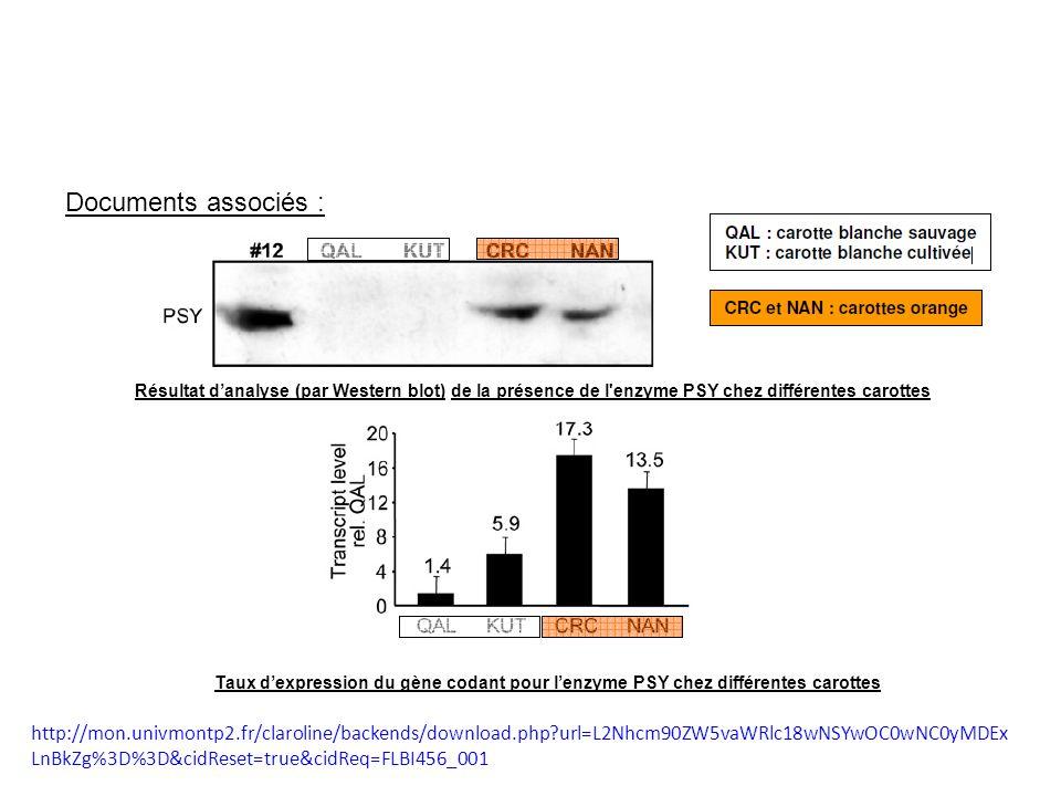 Résultat danalyse (par Western blot) de la présence de l'enzyme PSY chez différentes carottes Documents associés : Taux dexpression du gène codant pou