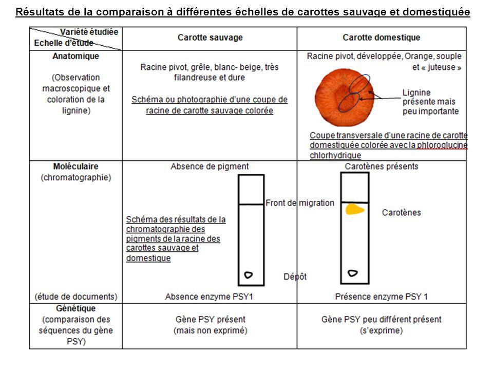 La sélection sexerce aux différentes échelles du phénotype et du génotype.