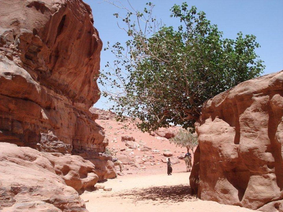 Les Bédouins : Connaisseurs, amoureux de leur territoire, servent aujourdhui de guides aux visiteurs