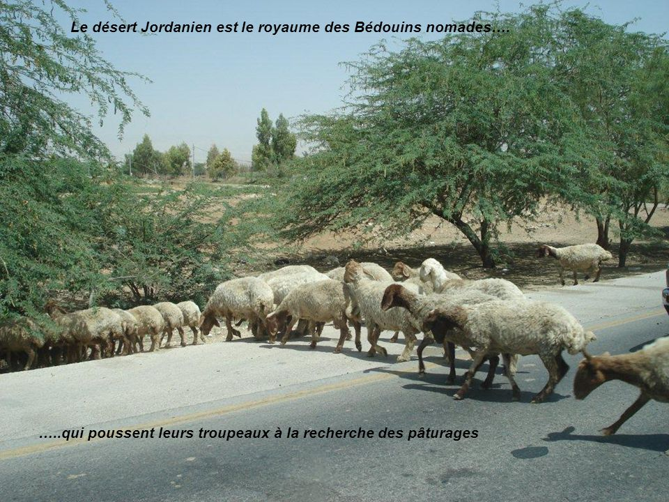 …..qui poussent leurs troupeaux à la recherche des pâturages Le désert Jordanien est le royaume des Bédouins nomades….
