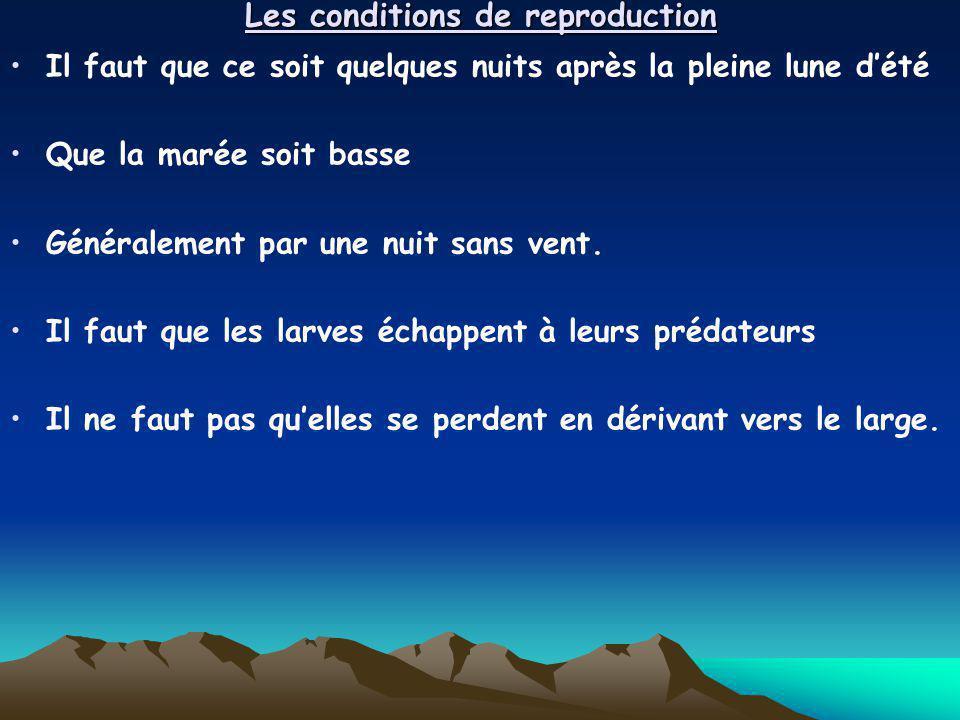Les conditions de reproduction Il faut que ce soit quelques nuits après la pleine lune dété Que la marée soit basse Généralement par une nuit sans ven