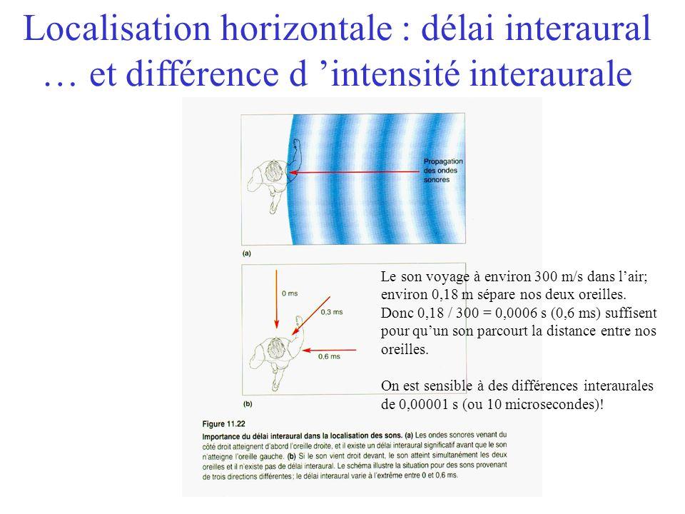 Localisation sonore Horizontale –Indices binauraux Délai interaural Différence dintensité interaurale Verticale Distance