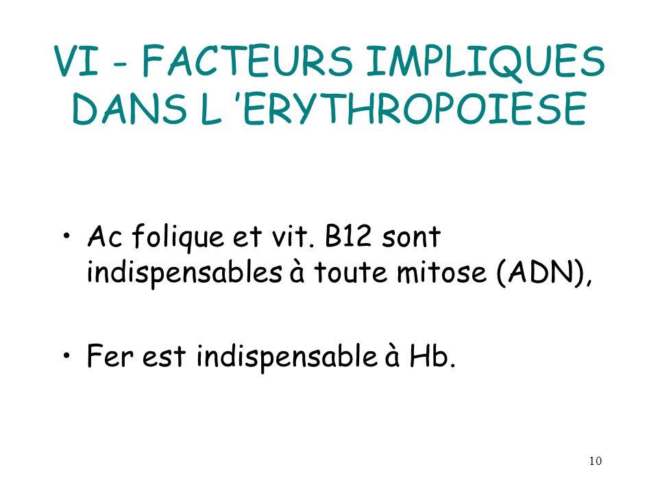 10 VI - FACTEURS IMPLIQUES DANS L ERYTHROPOIESE Ac folique et vit. B12 sont indispensables à toute mitose (ADN), Fer est indispensable à Hb.