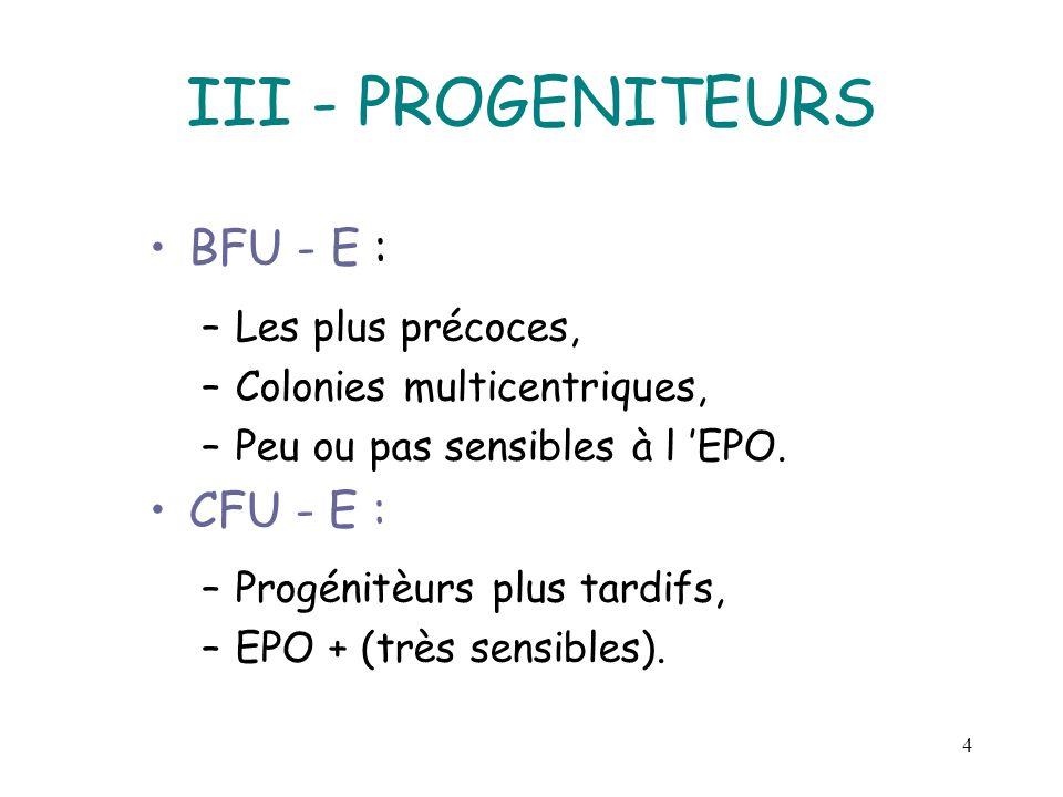 4 III - PROGENITEURS BFU - E : –Les plus précoces, –Colonies multicentriques, –Peu ou pas sensibles à l EPO. CFU - E : –Progénitèurs plus tardifs, –EP