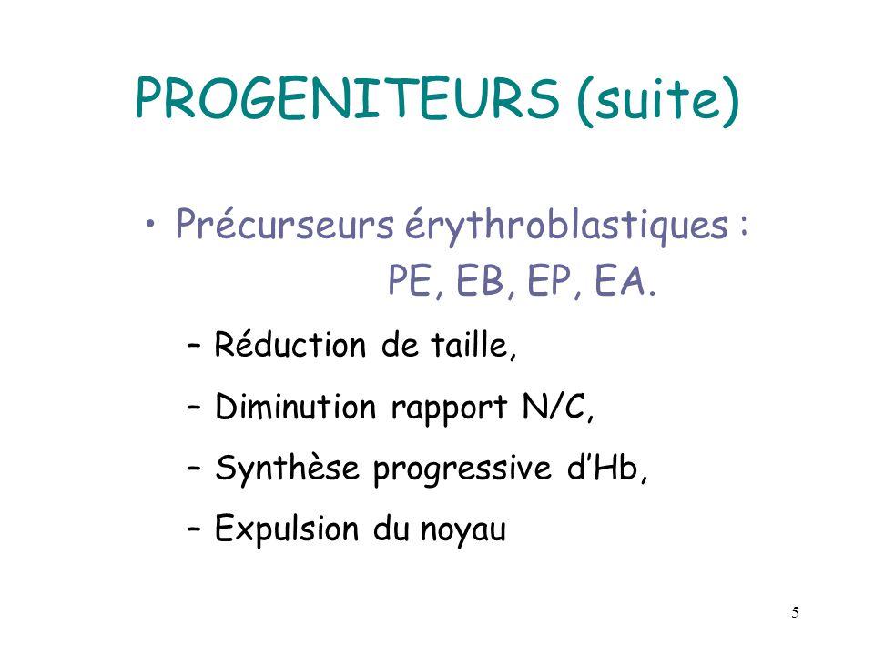 5 PROGENITEURS (suite) Précurseurs érythroblastiques : PE, EB, EP, EA. –Réduction de taille, –Diminution rapport N/C, –Synthèse progressive dHb, –Expu