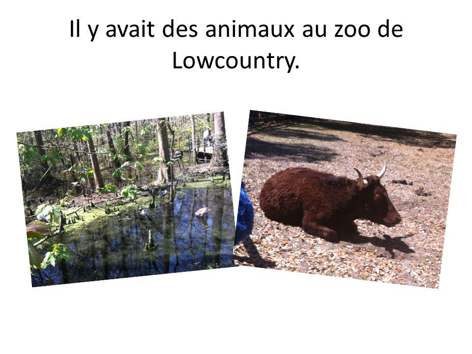 Il y avait des animaux au zoo de Lowcountry.