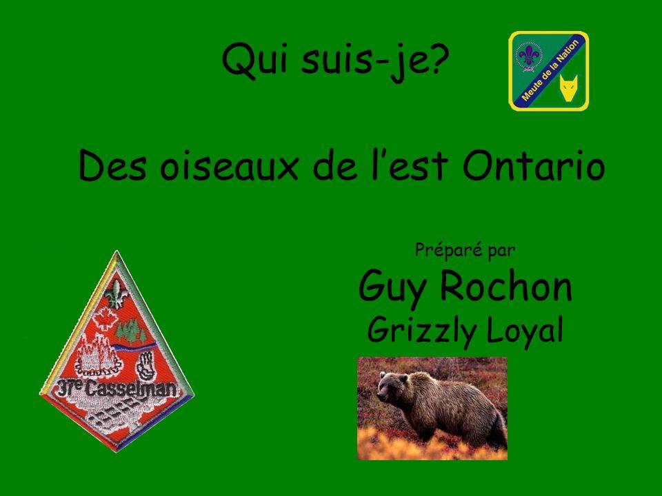 Qui suis-je? Des oiseaux de lest Ontario Préparé par Guy Rochon Grizzly Loyal