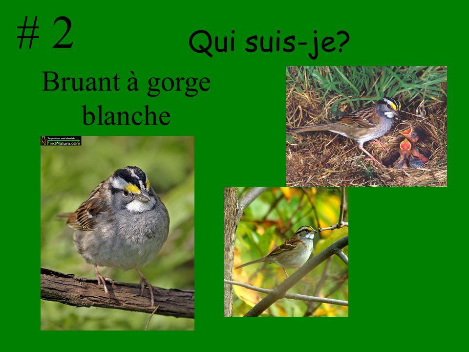 Findnature.net Oiseaux.net Audevard.aureleir.free.fr fr.wikipedia.org Flickr.com MERCI BEAUCOUP