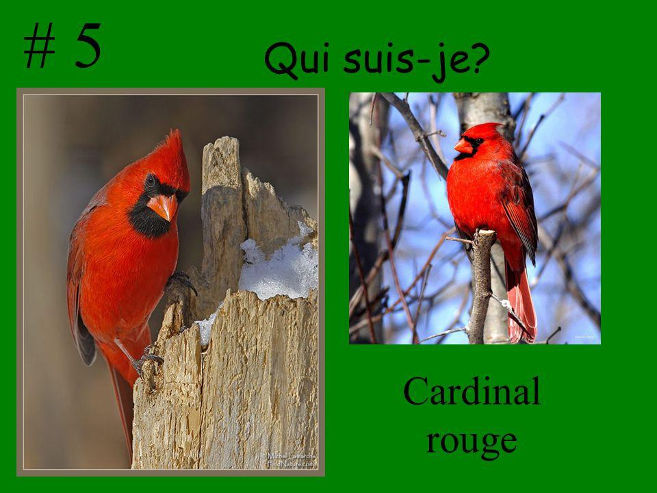 Qui suis-je? Cardinal rouge # 5