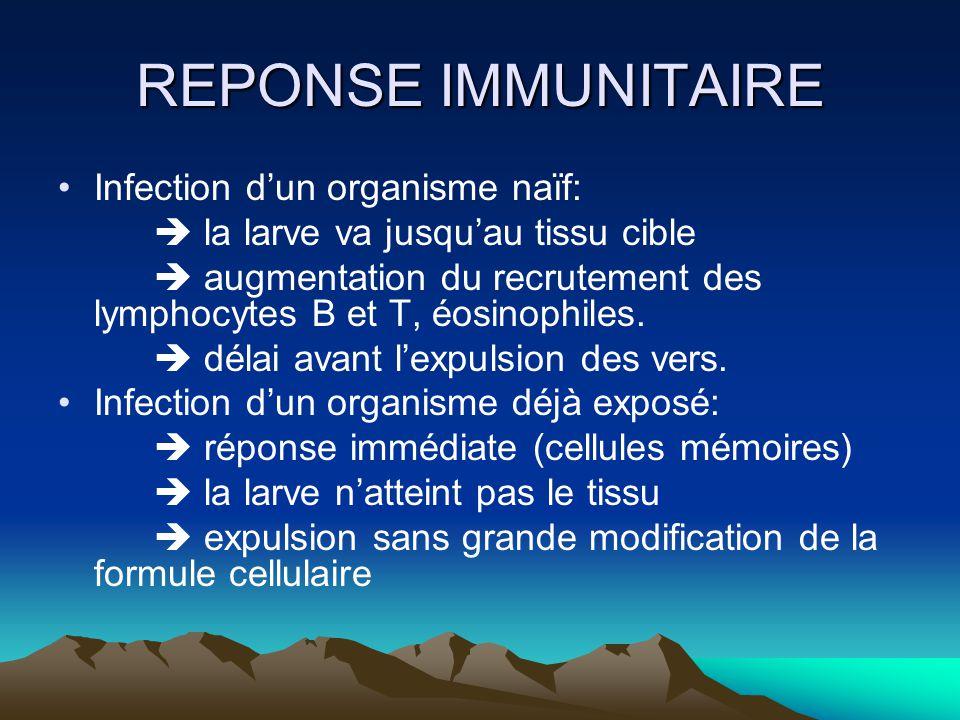 REPONSE IMMUNITAIRE Infection dun organisme naïf: la larve va jusquau tissu cible augmentation du recrutement des lymphocytes B et T, éosinophiles. dé