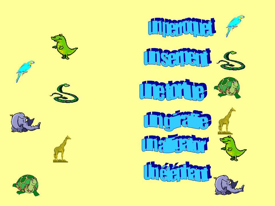 1.Un animal / des animaux - a pet / some pets 2.jai / je nai pas de / je voudrais – I have/I dont have/I would like 3.Un chat – a cat 4.Un chien - dog 5.Un lapin – a rabbit 6.Un oiseau – a bird 7.Un poisson – a fish 8.Un cheval – a horse 9.Un hamster – a hamster 10.Une souris – a mouse 11.Une araignée –a spider 12.Une grenouille – a frog 13.Un perroquet – a parrot 14.Un éléphant – an elephant 15.Une girafe – a giraffe 16.Un alligator – an alligator 17.Une tortue – a turtle 18.Un serpent – a snake