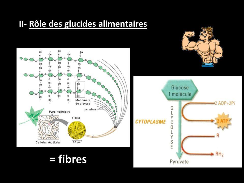 II- Rôle des glucides alimentaires = fibres
