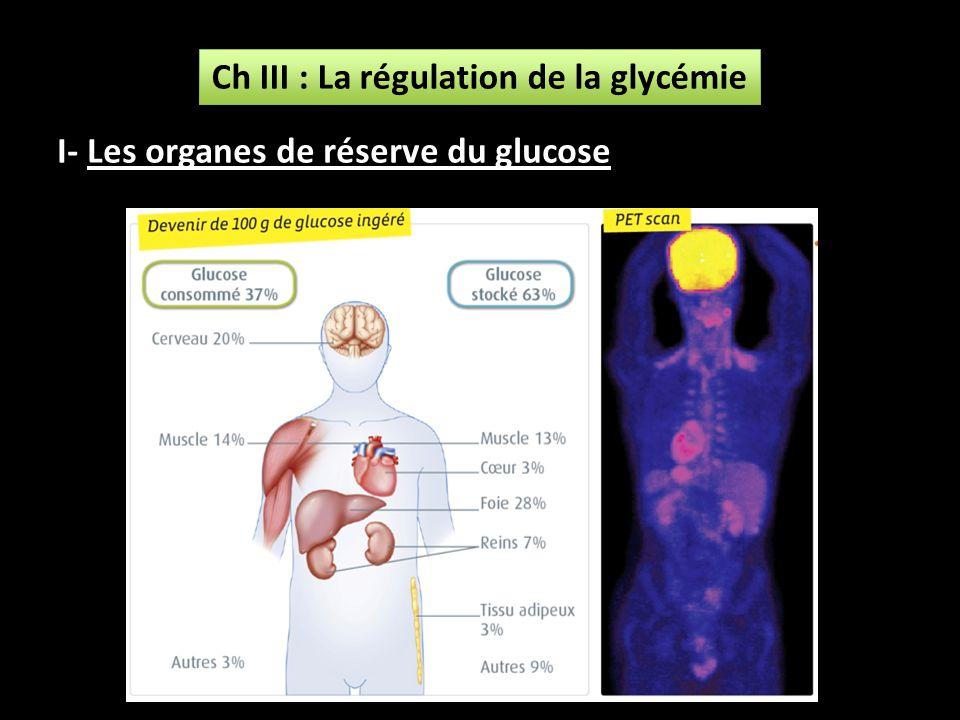 Ch III : La régulation de la glycémie I- Les organes de réserve du glucose