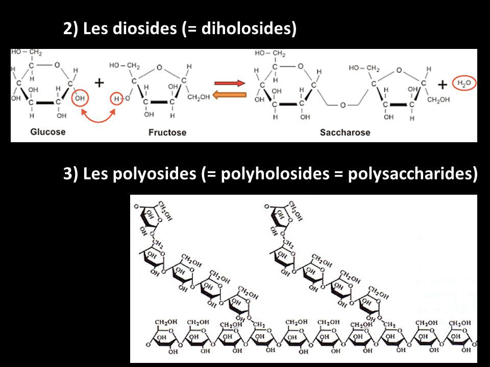 2) Les diosides (= diholosides) 3) Les polyosides (= polyholosides = polysaccharides)
