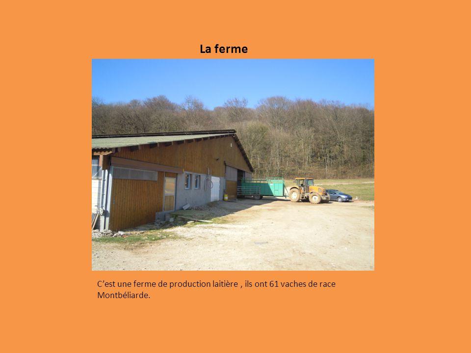 La ferme Cest une ferme de production laitière, ils ont 61 vaches de race Montbéliarde.