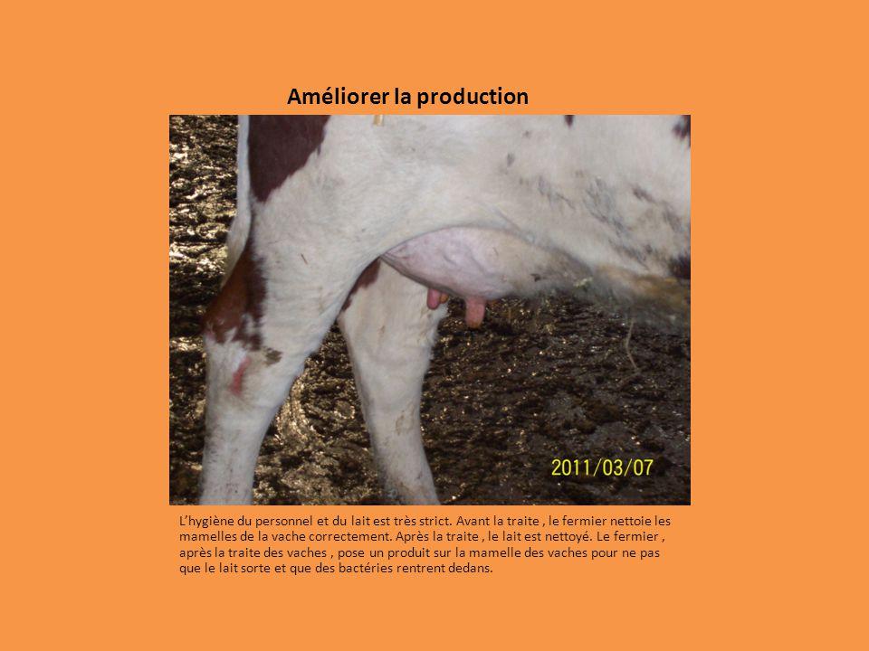 Améliorer la production Lhygiène du personnel et du lait est très strict. Avant la traite, le fermier nettoie les mamelles de la vache correctement. A