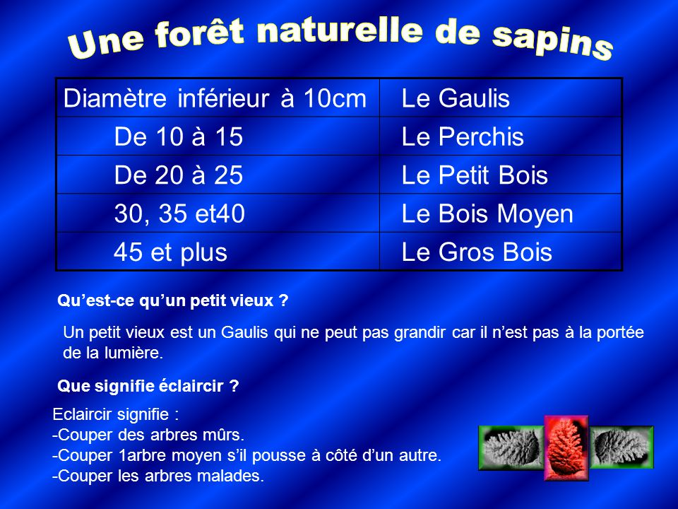 Diamètre inférieur à 10cm Le Gaulis De 10 à 15 Le Perchis De 20 à 25 Le Petit Bois 30, 35 et40 Le Bois Moyen 45 et plus Le Gros Bois Quest-ce quun pet