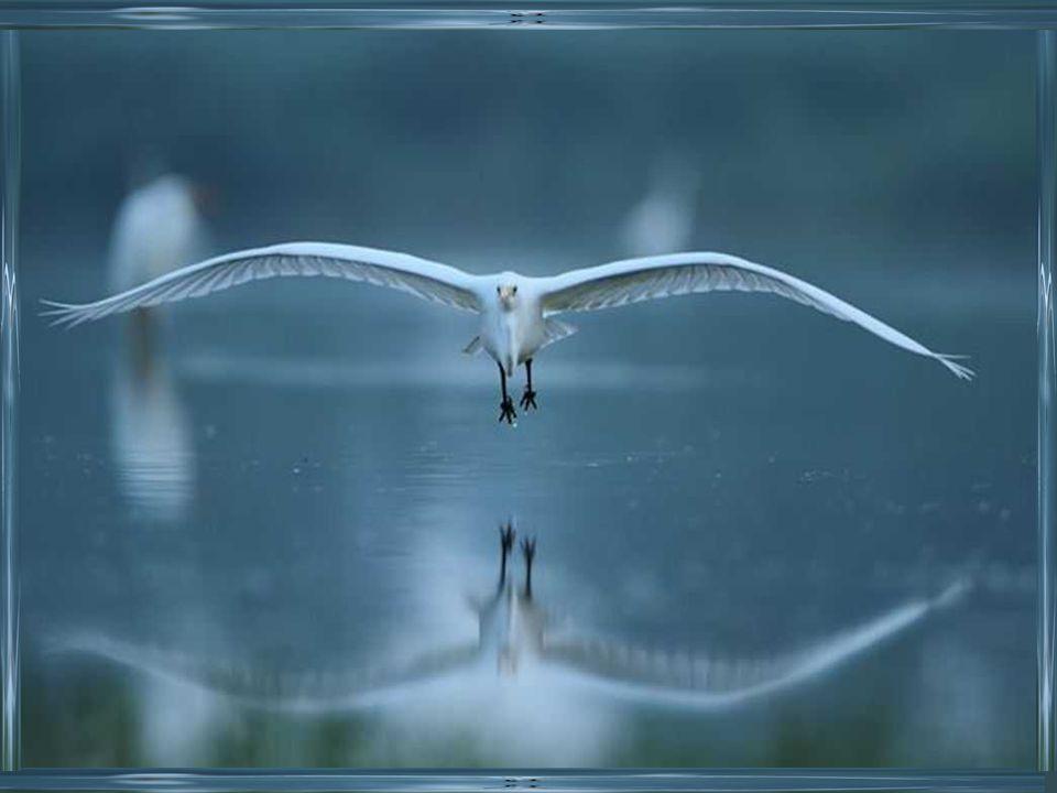 Jai découvert, douce comme un poème la lumière damour et de compassion!