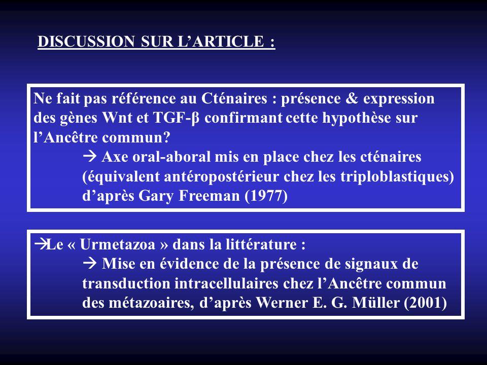 DISCUSSION SUR LARTICLE : Ne fait pas référence au Cténaires : présence & expression des gènes Wnt et TGF-β confirmant cette hypothèse sur lAncêtre co