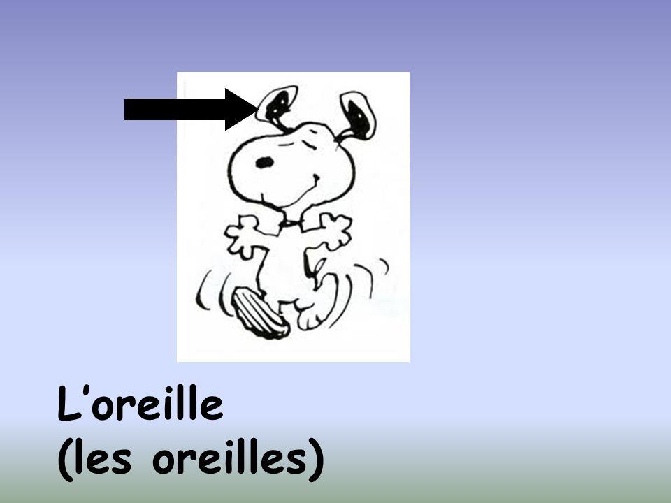 Loreille (les oreilles)