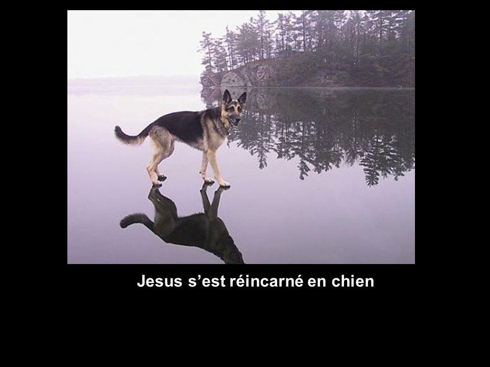 Jesus sest réincarné en chien