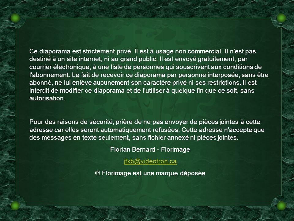 Unchained Melody – Esteban Texte et création Florian Bernard Tous droits réservés - 2003/2005 jfxb@videotron.ca