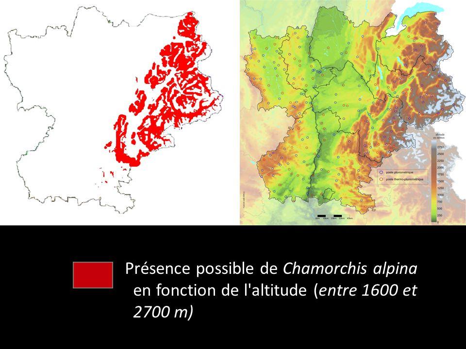 Présence possible de Chamorchis alpina en fonction de l'altitude (entre 1600 et 2700 m)