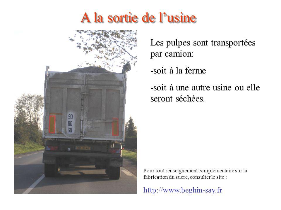 A la sortie de lusine Les pulpes sont transportées par camion: -soit à la ferme -soit à une autre usine ou elle seront séchées.