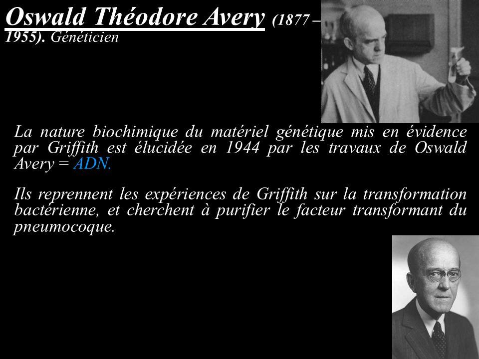 Oswald Théodore Avery (1877 – 1955). Généticien La nature biochimique du matériel génétique mis en évidence par Griffith est élucidée en 1944 par les
