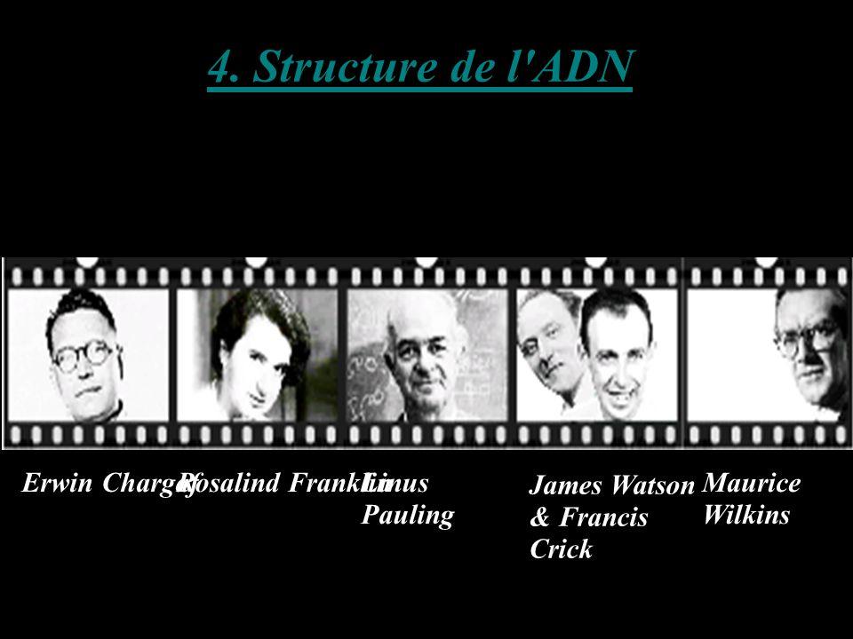 4. Structure de l'ADN Erwin ChargaffRosalind FranklinLinus Pauling James Watson & Francis Crick Maurice Wilkins