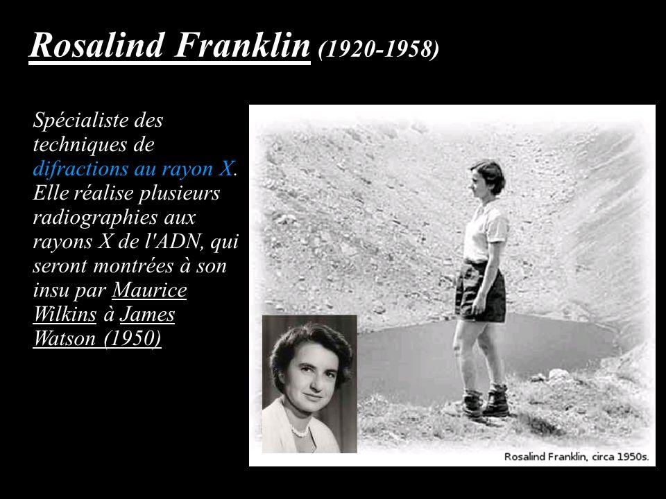 Rosalind Franklin (1920-1958) Spécialiste des techniques de difractions au rayon X. Elle réalise plusieurs radiographies aux rayons X de l'ADN, qui se