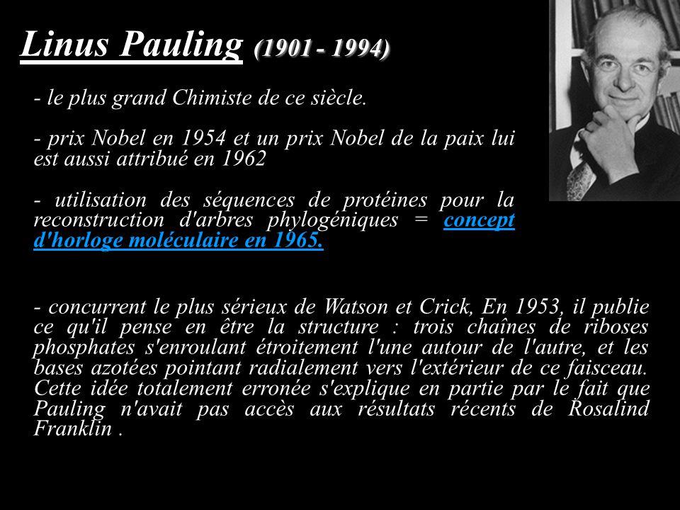 (1901 - 1994) Linus Pauling (1901 - 1994) - le plus grand Chimiste de ce siècle. - prix Nobel en 1954 et un prix Nobel de la paix lui est aussi attrib