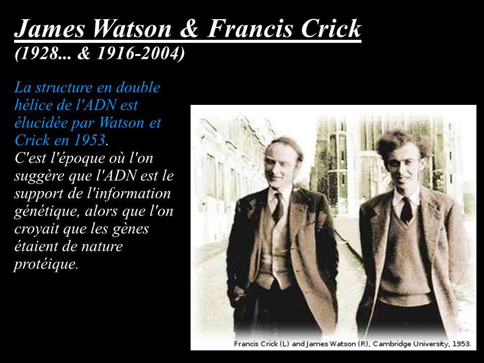 James Watson & Francis Crick (1928... & 1916-2004) La structure en double hélice de l'ADN est élucidée par Watson et Crick en 1953. C'est l'époque où