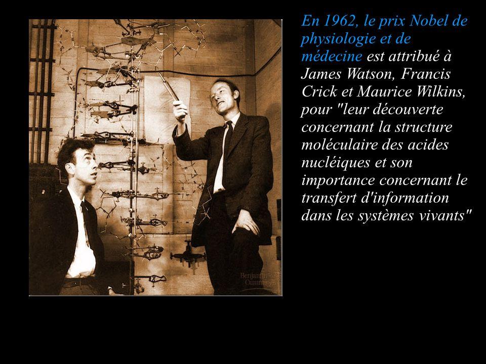 En 1962, le prix Nobel de physiologie et de médecine est attribué à James Watson, Francis Crick et Maurice Wilkins, pour