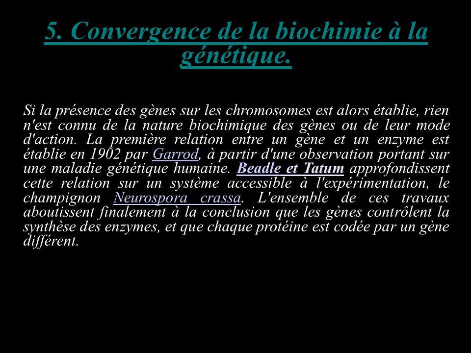 5. Convergence de la biochimie à la génétique. Si la présence des gènes sur les chromosomes est alors établie, rien n'est connu de la nature biochimiq