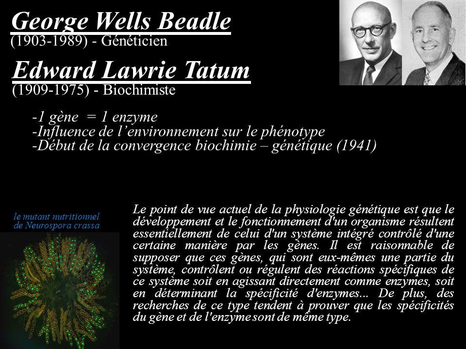 -1 gène = 1 enzyme -Influence de lenvironnement sur le phénotype -Début de la convergence biochimie – génétique (1941) George Wells Beadle (1903-1989)