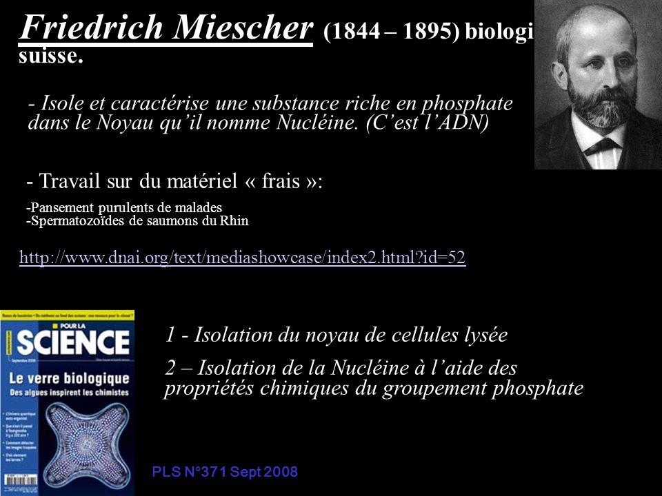 Friedrich Miescher (1844 – 1895) biologiste suisse. - Isole et caractérise une substance riche en phosphate dans le Noyau quil nomme Nucléine. (Cest l