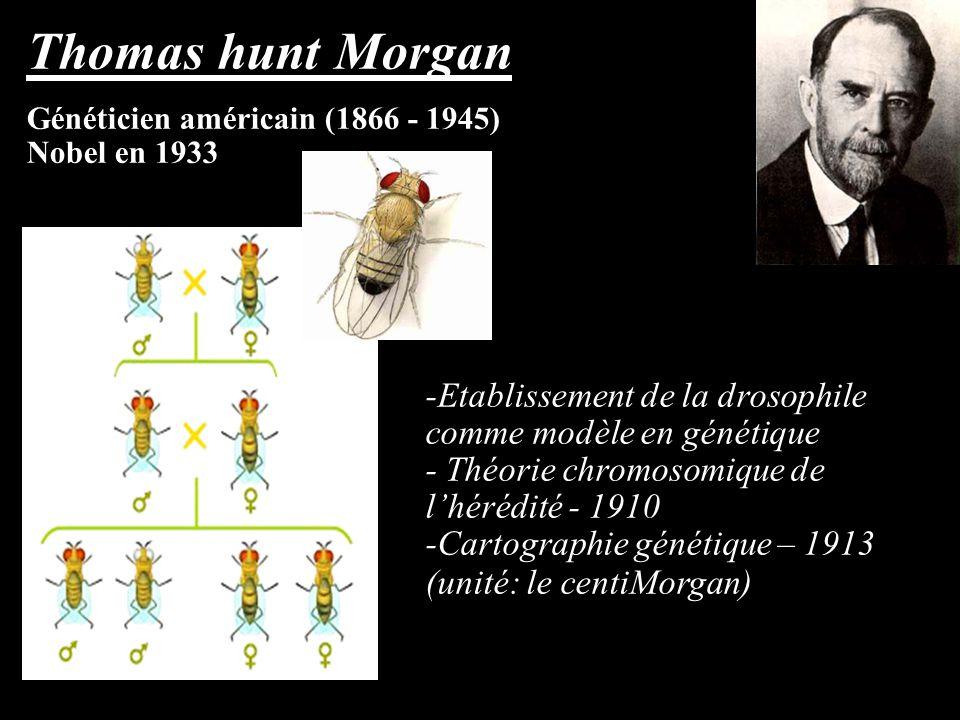 Thomas hunt Morgan Généticien américain (1866 - 1945) Nobel en 1933 -Etablissement de la drosophile comme modèle en génétique - Théorie chromosomique