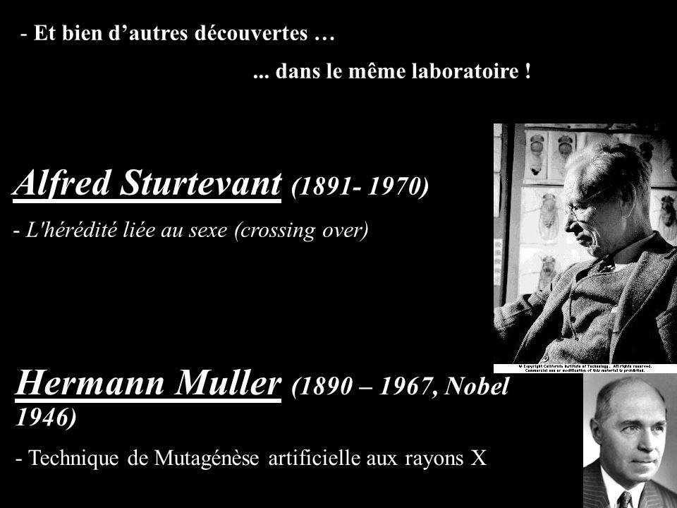 - Et bien dautres découvertes …... dans le même laboratoire ! Hermann Muller (1890 – 1967, Nobel 1946) - Technique de Mutagénèse artificielle aux rayo