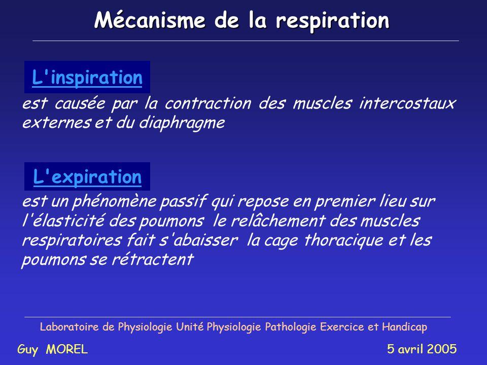 Laboratoire de Physiologie Unité Physiologie Pathologie Exercice et Handicap Guy MOREL 5 avril 2005 Structuresmuscles Pm + + Thorax Pab Abdomen IC DI