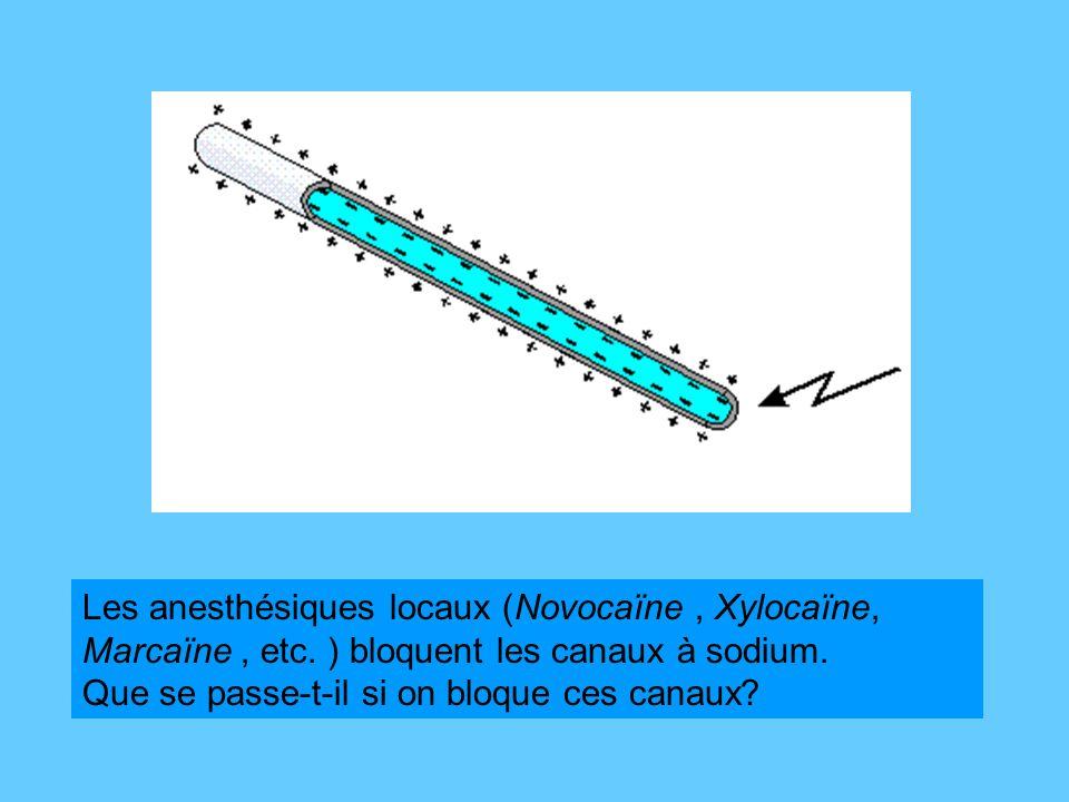 Les anesthésiques locaux (Novocaïne, Xylocaïne, Marcaïne, etc.