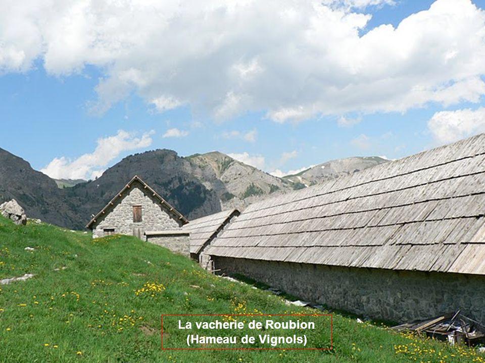 Le Mont Mounier Ceinturé de hautes barres de calcaire tithonique, au faciès typique et reconnaissable, le Mont Mounier impose sa présence massive en m