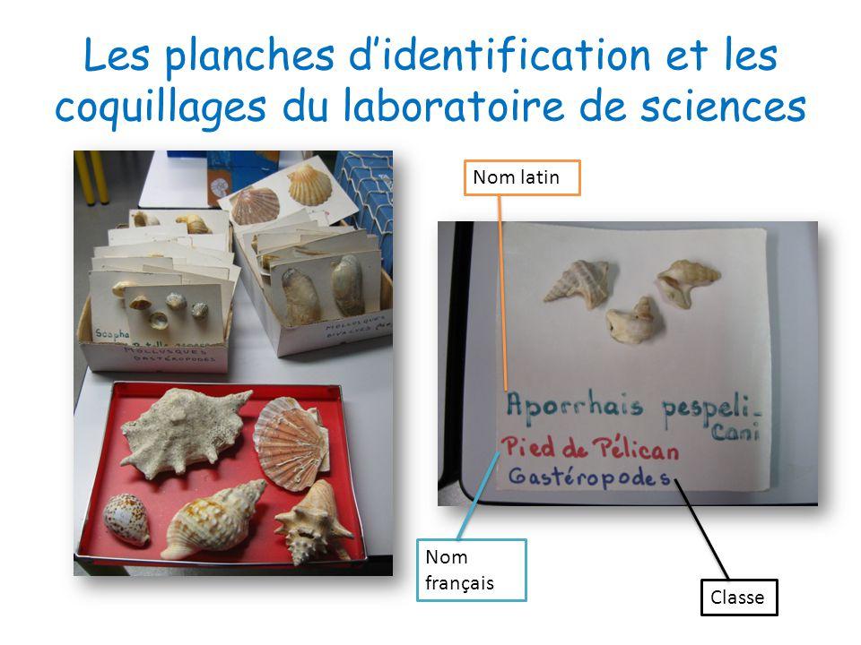 Les planches didentification et les coquillages du laboratoire de sciences Nom latin Nom français Classe