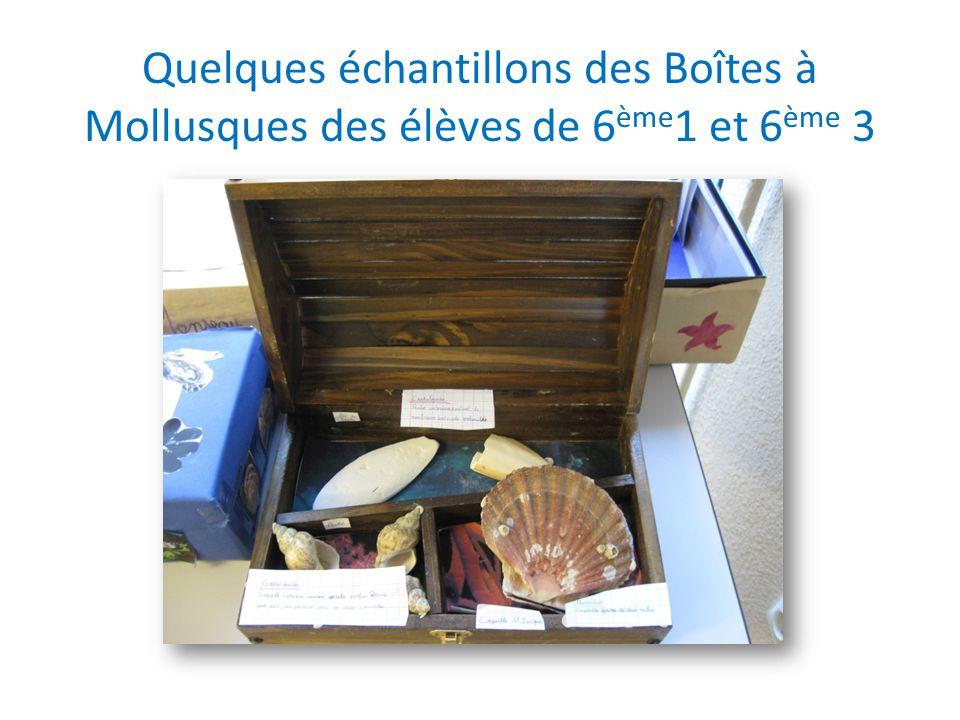 Quelques échantillons des Boîtes à Mollusques des élèves de 6 ème 1 et 6 ème 3